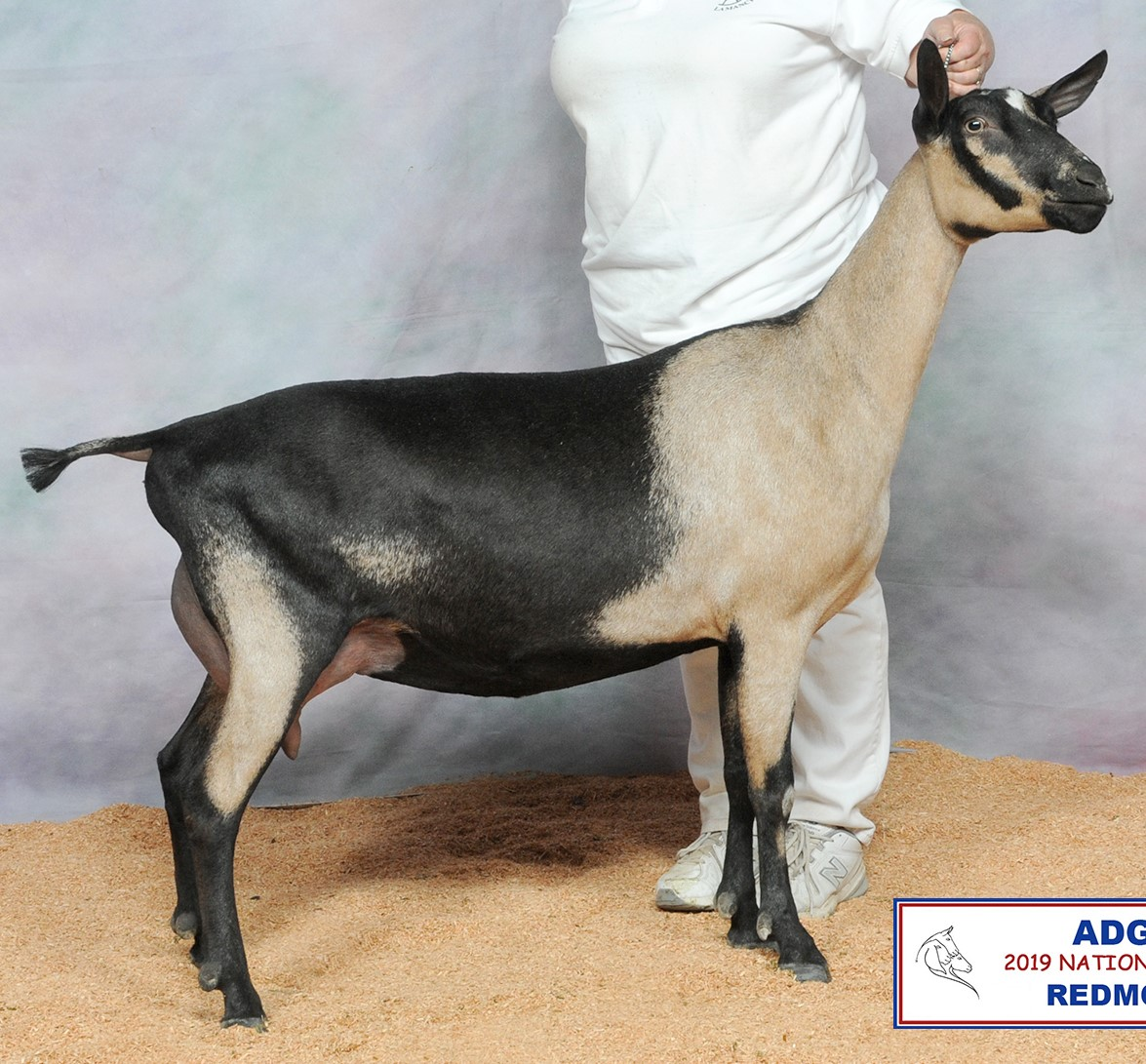 ROO @ 2019 National Show, age 2